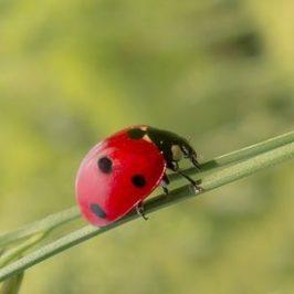 Gondolatok a biológiai védekezésről