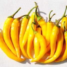 Tüzes Sárga paprika
