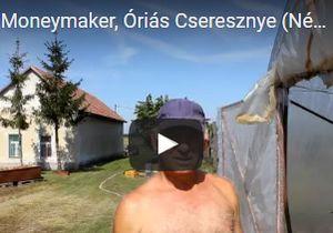 Videó – Némedi-Varga József paprikatermelő